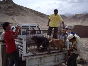 Kunzang's truck for capture, transport, and errands.