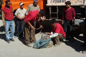 Animal Handlers from Sikkim